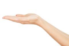 Empty Human Hands(Beauty Woman hands) Stock Photos