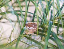 Empty Hummingbird Nest in a Palm Tree Royalty Free Stock Images