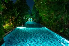 Empty, illuminated swimming pool, surrounded by green palm trees at night stock photography