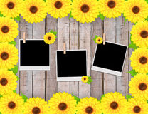 Empty instant photos and sunflowers Stock Photos