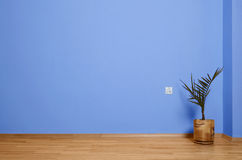 Empty interior with wooden floor, flower and blue wall Royalty Free Stock Photography