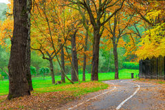 Empty jogging track in the park Stock Photography