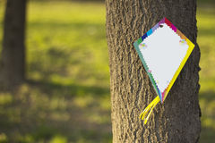 Empty kite on a tree Royalty Free Stock Photos