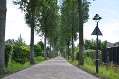 Empty Lane Surrounded By Trees Stock Photo