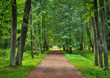 Empty linden alley in the park Stock Photography