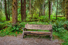Empty Log Bench in the Forest Royalty Free Stock Image