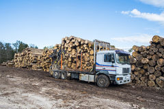 An empty log truck. Waiting to be loaded with tree logs Royalty Free Stock Image