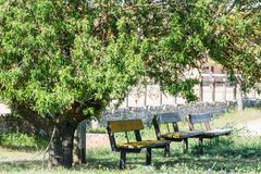 Empty benches in the shade of trees royalty free stock photo
