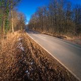 Empty and long road leads deep into the forest Royalty Free Stock Photography