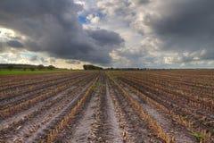 Empty maize field Stock Photo