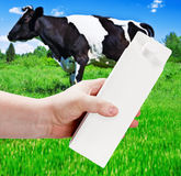 Empty milk carton. With space for text and advertising in a landscape with grazing cows Royalty Free Stock Photo