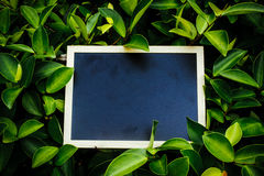 Empty mini black board beside the green leaf Royalty Free Stock Photography