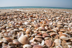 Empty mixed seashells on the sea sand stock photo
