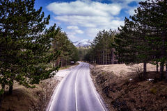 Empty motorway. With some trees on the side at Zlatibor mountain stock image