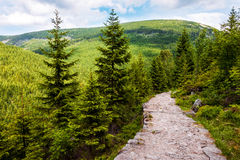 Empty mountain hiking trail. Surrounded by green trees at summer Stock Photo
