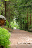 Empty mountain trail in green forest Stock Photography