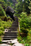 Empty mountain trail in green forest Stock Images