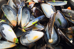 Empty mussel shells Royalty Free Stock Image