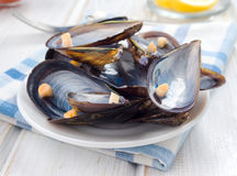 Empty mussel shells on the table Stock Photography