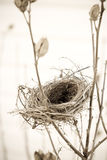 Empty nest. Closeup image of an empty bird nest Royalty Free Stock Image