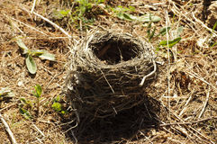 Empty nest Stock Image