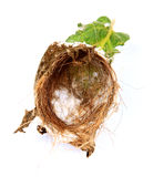 Empty nest. Empty baya bird nest over white background Royalty Free Stock Photos