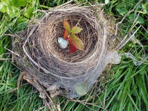 Empty nest. With an eggshell and cobwebs Stock Photo