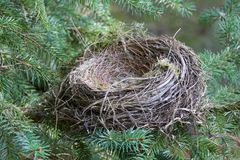 The Empty Nest. The baby birds have hatched and flown away Royalty Free Stock Photos