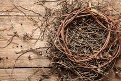Empty nest Stock Photos