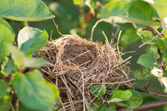 Empty nest on the branch Royalty Free Stock Photo