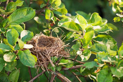 Empty nest on the branch Stock Images