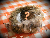Empty nest, children gone. Empty nest, children left & are gone Stock Photography