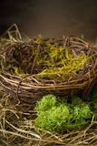 Empty nest with hay and moss Stock Image