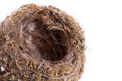 Empty nest Royalty Free Stock Photo