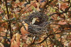Empty nest of small birds in the  forest. Stock Photography