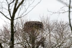 Empty nest. Of the stork Royalty Free Stock Photo
