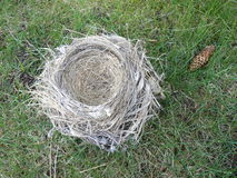 Empty nest syndrome Stock Photography