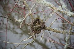 Empty nest in tree. In winter Stock Photos