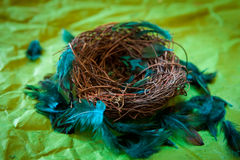 Empty nest with turquoise feathers. On a green background Royalty Free Stock Image