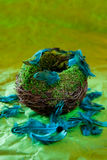 Empty nest with turquoise feathers. On a green background Royalty Free Stock Photos