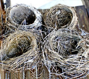 Empty Nests. Four abandoned nests are shown. I think of them as a symbolic sign of no more kids at home.....empty next syndrome Stock Images