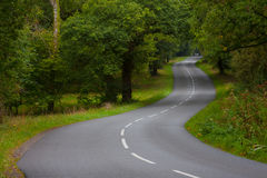 Empty New forest road. Long new forest twisting road without traffic royalty free stock images