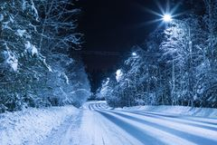The empty night road in the forest among the fir and pine trees stock photography