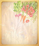 Empty old paper backdrop with hand drawn graphic illustration of assorted vegetables. Royalty Free Stock Images