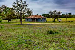Empty Old Texas Farm House with Bluebonnet Wildflowers. Stock Image