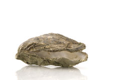 Empty oyster Stock Photography