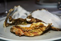 Empty oyster, background Royalty Free Stock Photos