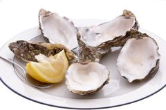 Empty Oyster Shells stock images