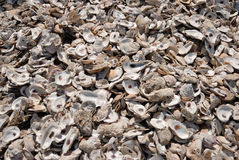 Empty oyster shells on beach Royalty Free Stock Photo