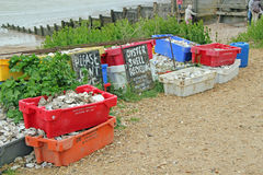 Empty Oyster Shells. This photo shows boxes of empty Oyster shells on Whitstable beach waiting to be re-cycled This photo can be used to promote re-cycling Stock Images